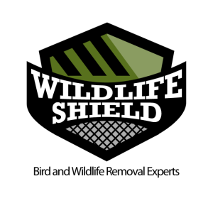 wildlife-removal-toronto