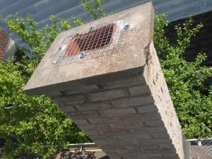 raccoon-in-chimney