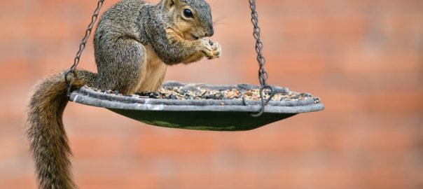 How to Protect Bird Feeders from Squirrels