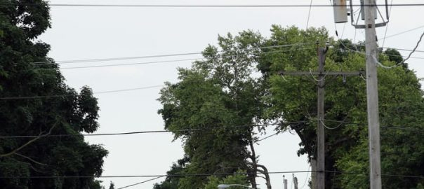 Why Squirrels Pose Threat to Electric Grid