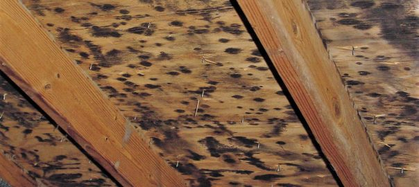 Common Causes of Mold in the Attic
