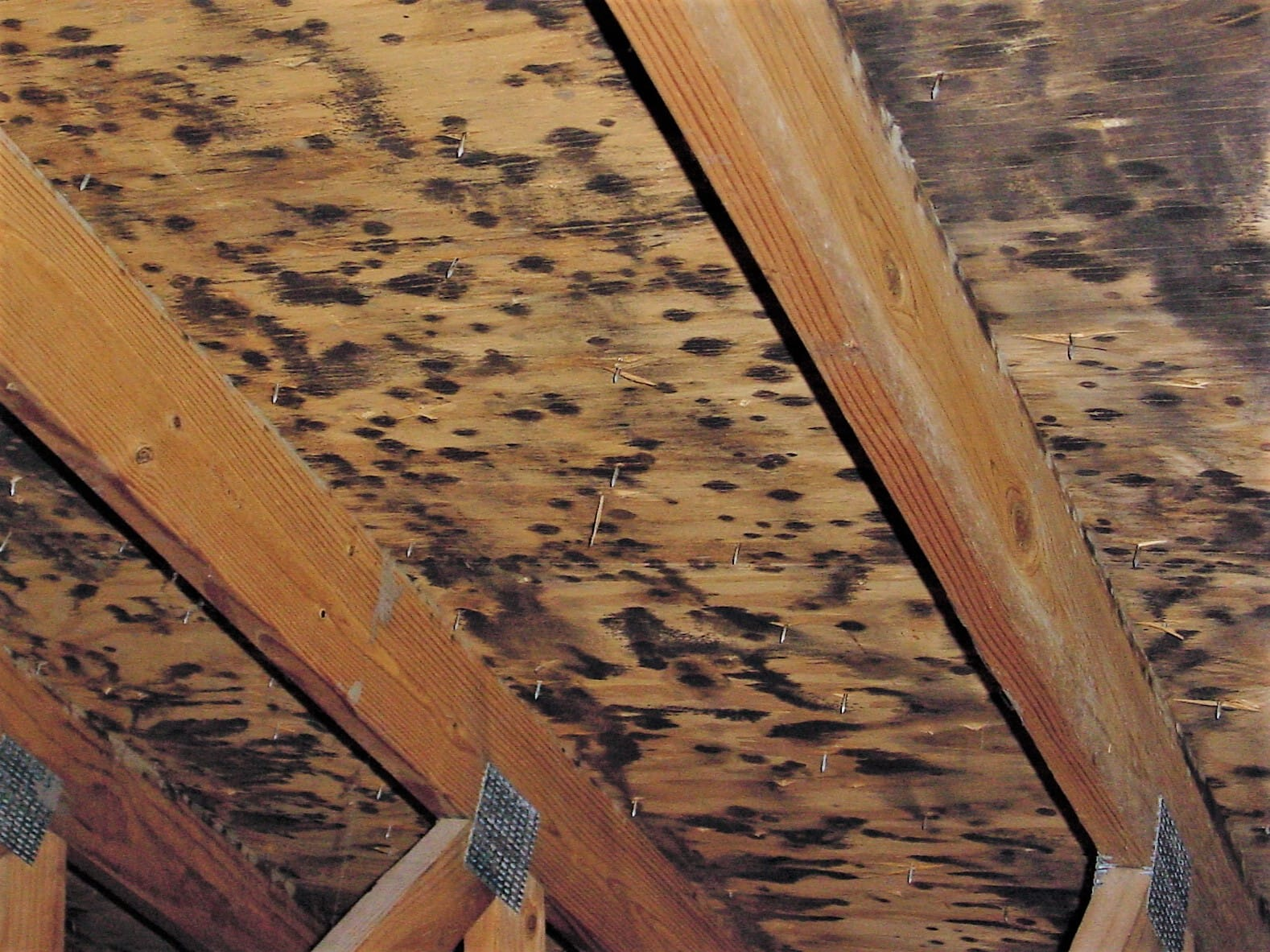 Common Causes Of Mold In The Attic Wildlifeshield Ca