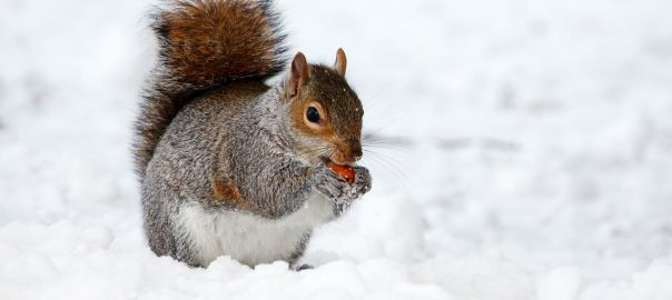 What Damage Can Squirrels Cause to Your Property