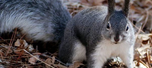 What Do Squirrels Do In Attics