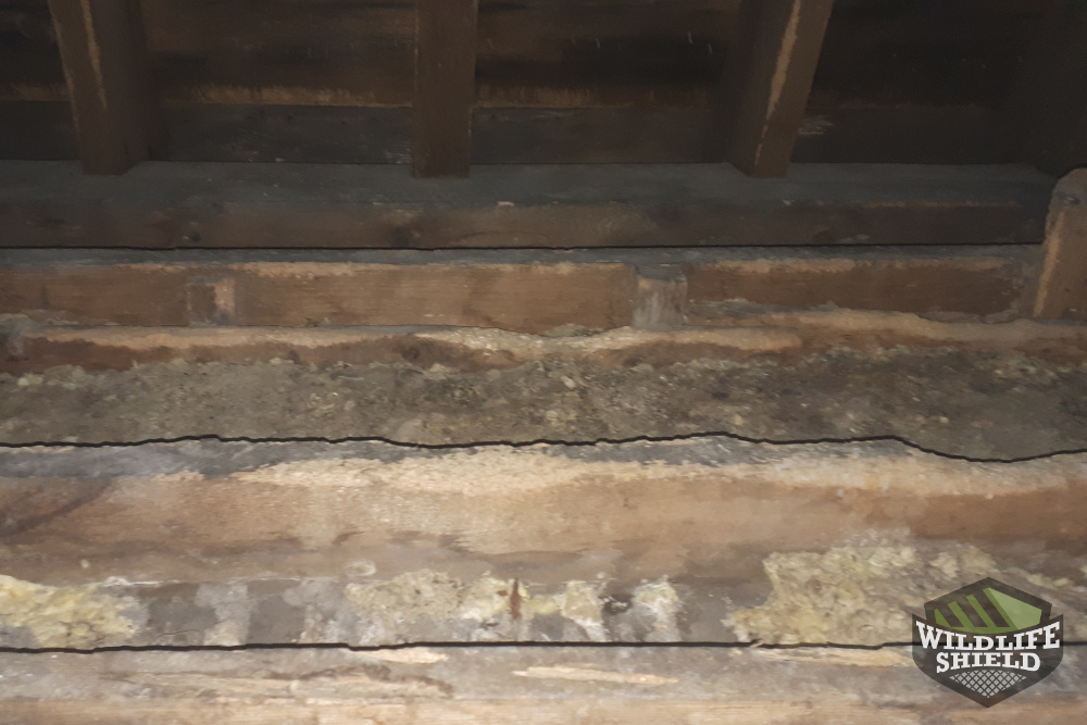Guelph Attic Insulation Removal