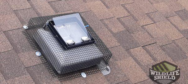 Raccoon One-Way Door on Roof Vent