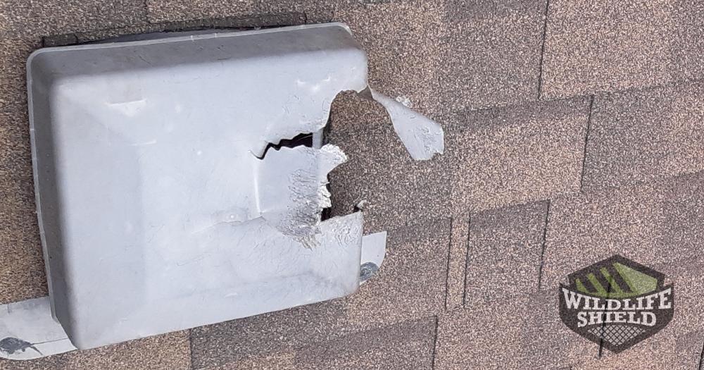 Roof Vent Damage Oakville